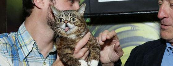 世界で一番かわいい猫