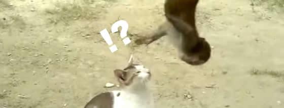 ちょっかいを出してくる小猿と猫の遊び方