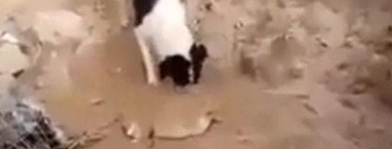 死んだ仔犬を土に埋める犬