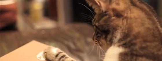 いたずらバンクに夢中になる猫