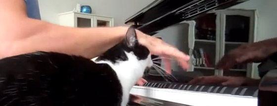 ピアノを弾くと邪魔をしふれ合いを求める猫
