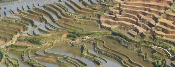 中国ハニ族の棚田がユネスコ世界遺産に登録