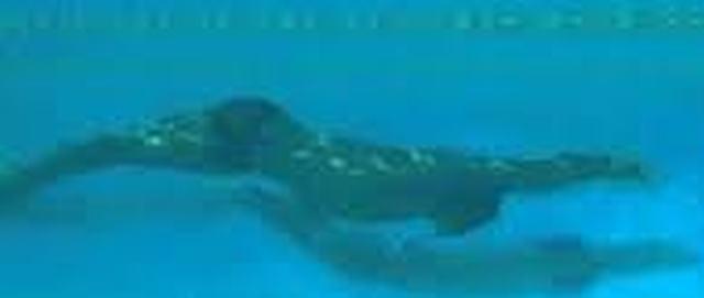 潜水ドルフィン