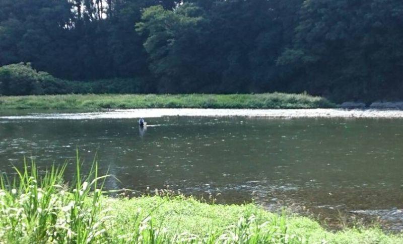 那珂川に鮎釣り人