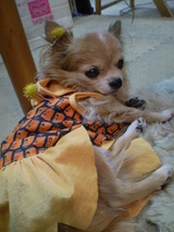 pumpkin姫