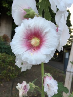 近所に咲いていたお花