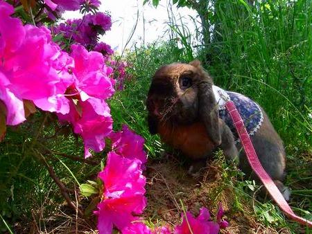 トロとお花と。