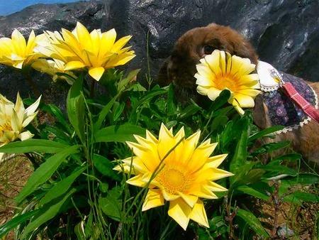 お花の中からこんにちは