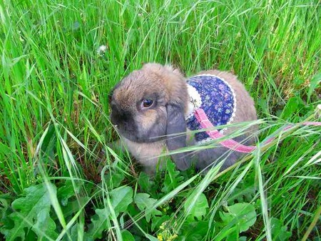 草がいっぱい