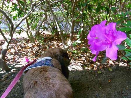 お花の香り感じたかな?