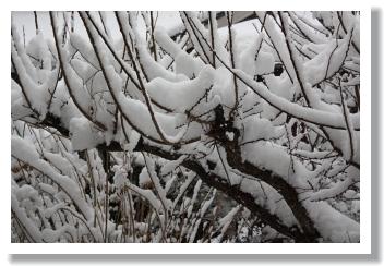 雪が降って