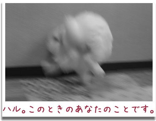 IMG_5591