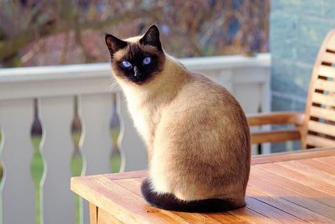 cat-2068462__340