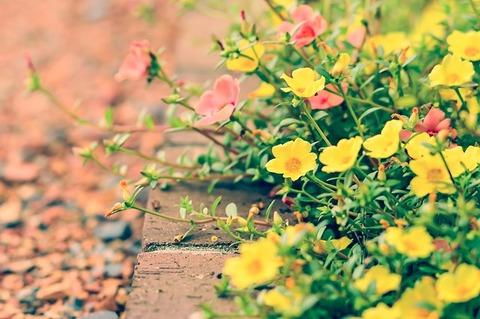 flowers-1750280_640