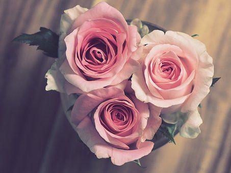 rose-3072698__340