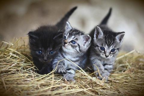 kittens-3535404_640