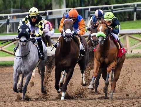 horses-3811270_640
