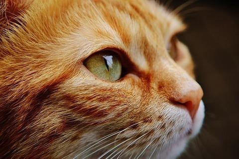 猫の可愛い部位選手権