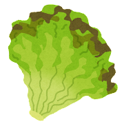 vegetable_sunny_lettuce