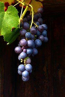 wine-874149__340