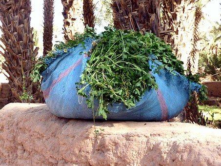 fresh-coriander-1148473__340