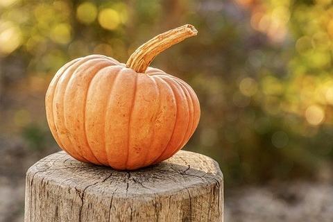 pumpkin-4454745_640