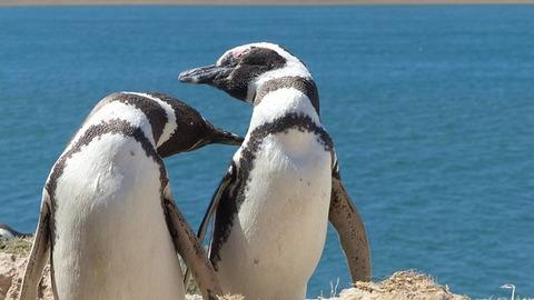 penguin-3386702__340