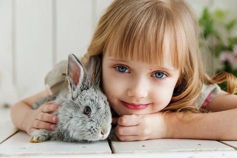 rabbit-3660673_640 (1)