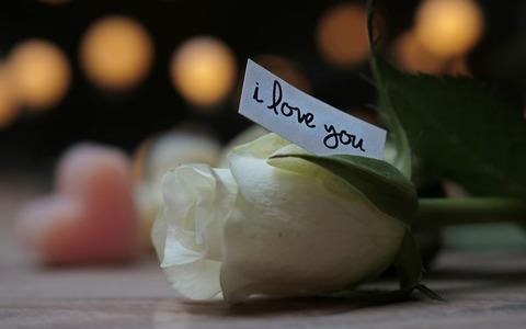 rose-3121249__480