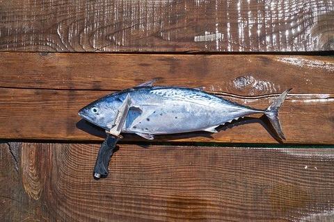 fish-3646491_640