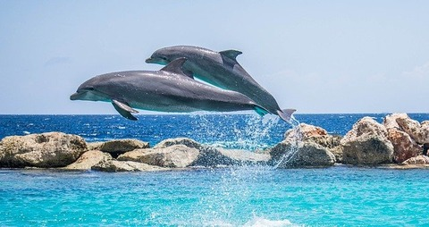 dolphins-906175_640