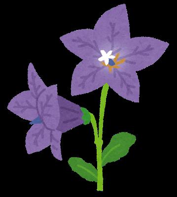 flower_kikyou