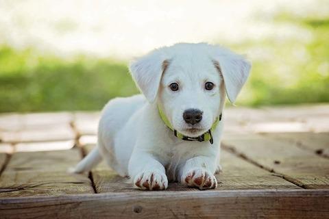 puppy-1903313__480