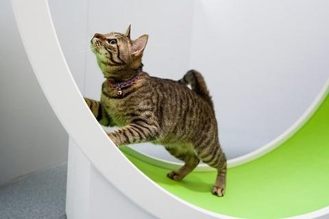 cat-2996769__340
