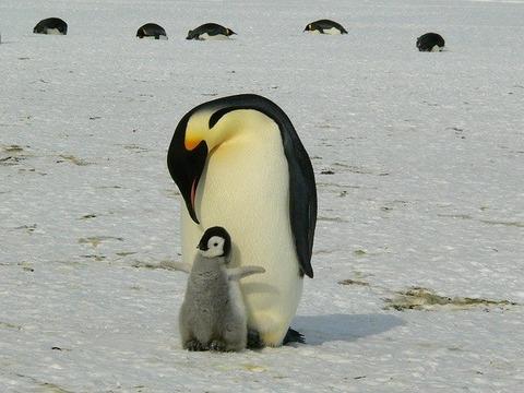 penguins-429134_640