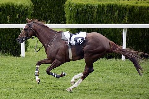 horse-racing-1577291__340