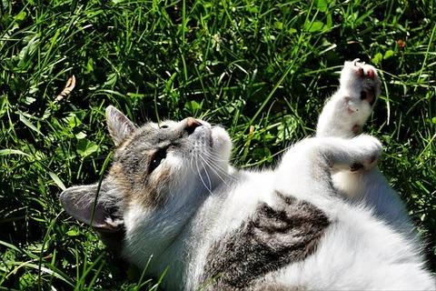 cat-3732117__340