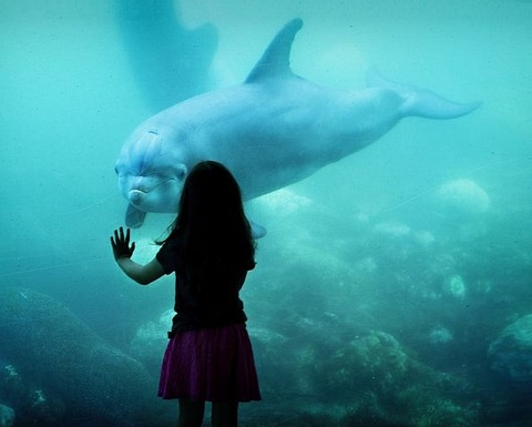 dolphin-1521998__480