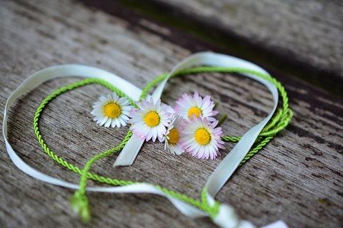 daisy-3392654__480