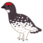 bird_raichou