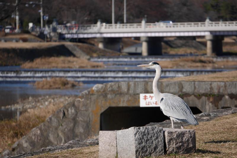 KAMOGAWA_BIRDS-6