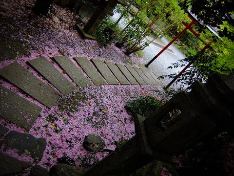 KYOTO_OHTOYO_INS-5