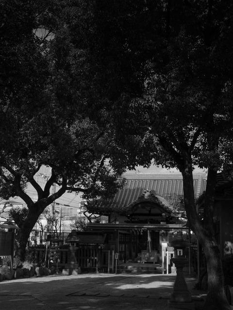 Fuyuno_Hizasiga_egaku-10