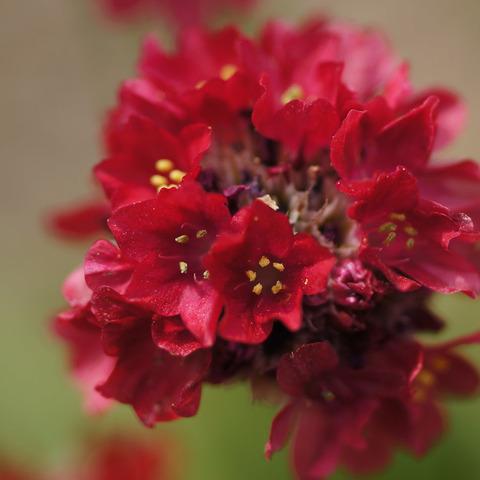 FLOWER_MACRO-4