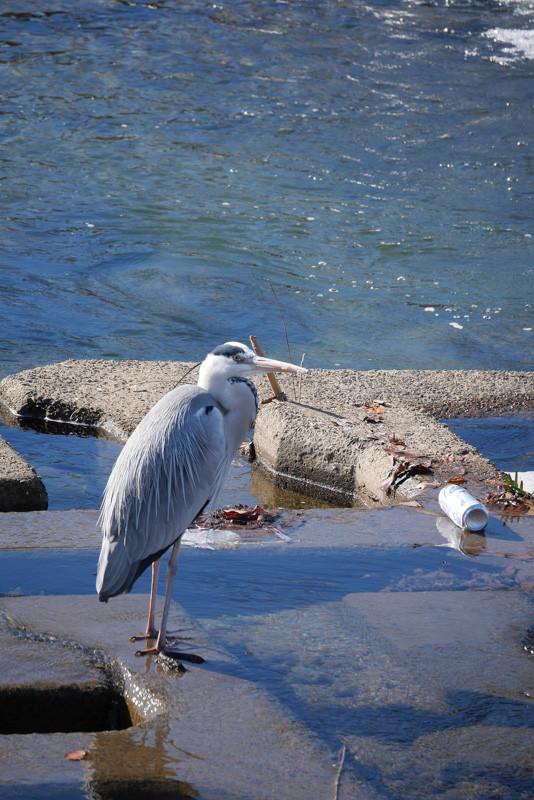 KAMOGAWA_BIRDS-5