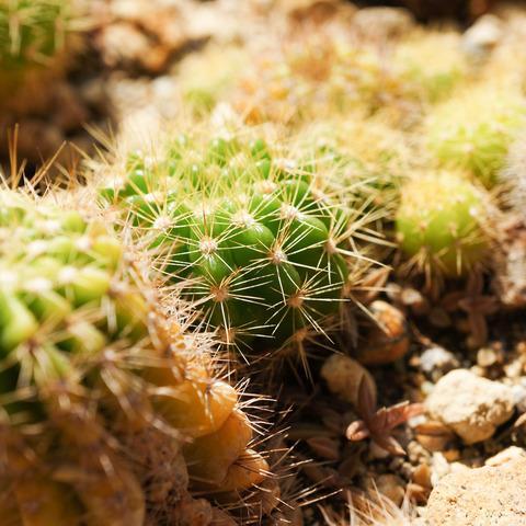 Botanical_garden-2