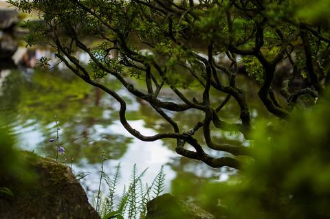 GINKAKUJI_HIGASHIYAMA-09663