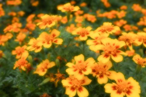 Botanical_garden-7