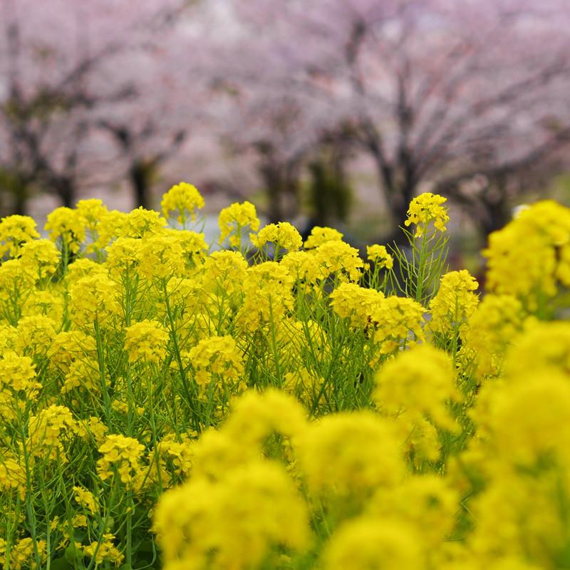 TSURUMI_FLOWER-1