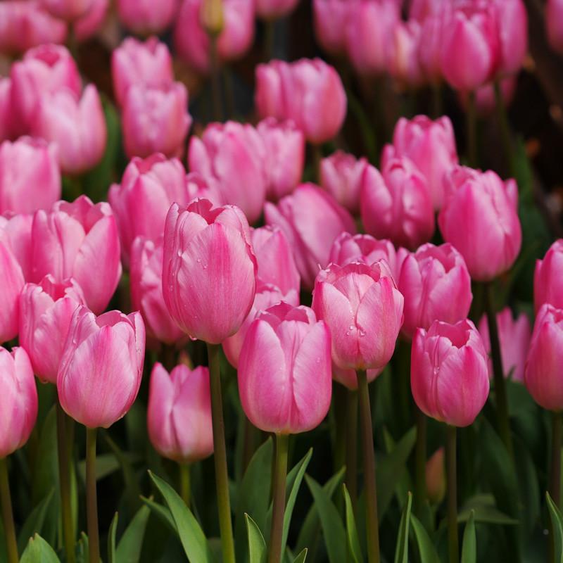 FLOWER_SPRING-2